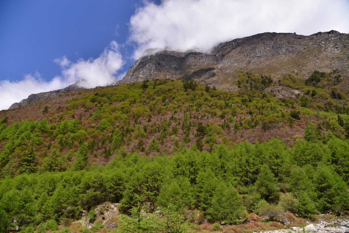 Ghunsa to Sele Le Pass Camp