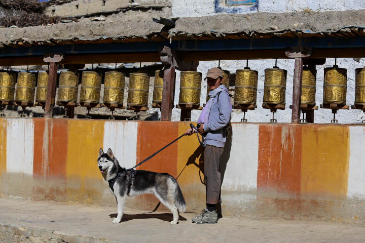 dog in Lo Manthang