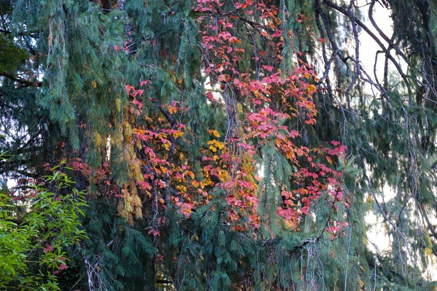 flower manaslu