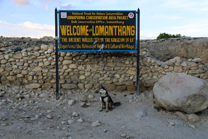 dog welcome to lomanthang